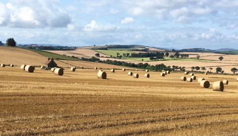 Arable field with hay bales